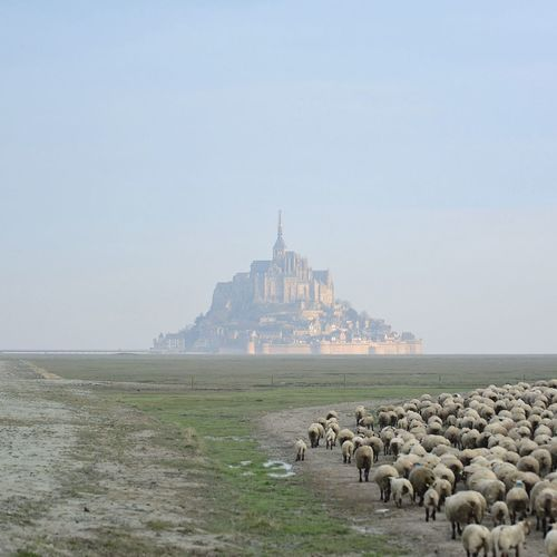 Animal Themes Architecture Building Exterior Day Dome France France Photos Landscape #Nature #photography Landscape_captures Landscape_Collection Landscape_photography Mont Saint Michel Bay Mont Saint-Michel Nature No People Outdoors Sky Travel Destinations Water