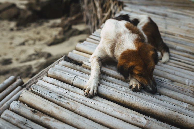Close-Up Of Dog Sleeping On Pier