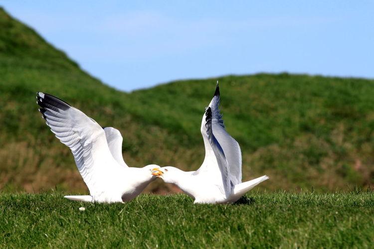 Bird on grassy field