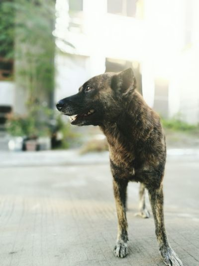 Waitingforhisgirl Canine Streetphotography