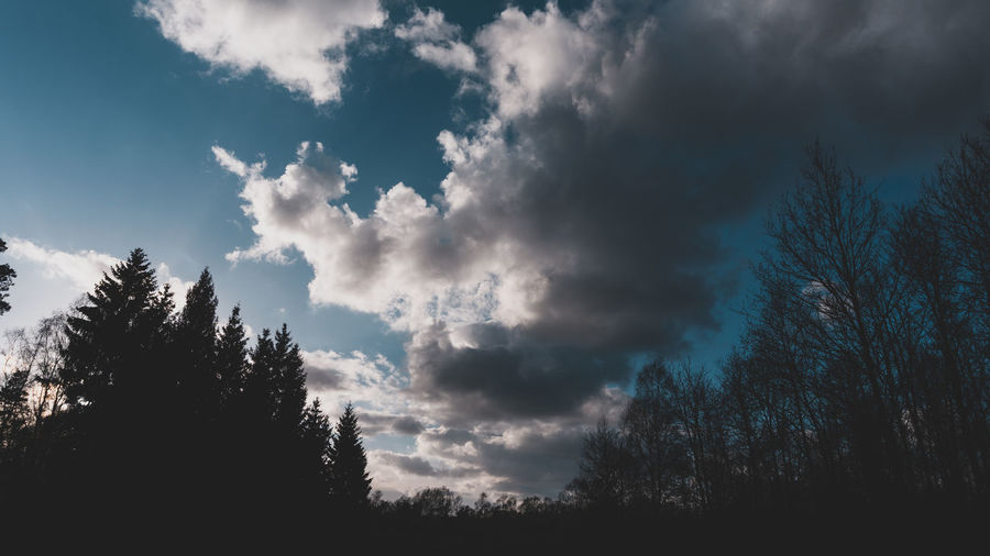 Tree Cloud - Sky Sky Plant Beauty In Nature Tranquility No People Tranquil Scene Nature Scenics - Nature Silhouette Low Angle View Growth Day Non-urban Scene Forest Outdoors Land Sunlight EyeEm Best Shots EyeEm Selects EyeEm Gallery