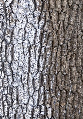 Full frame shot of cracked pattern