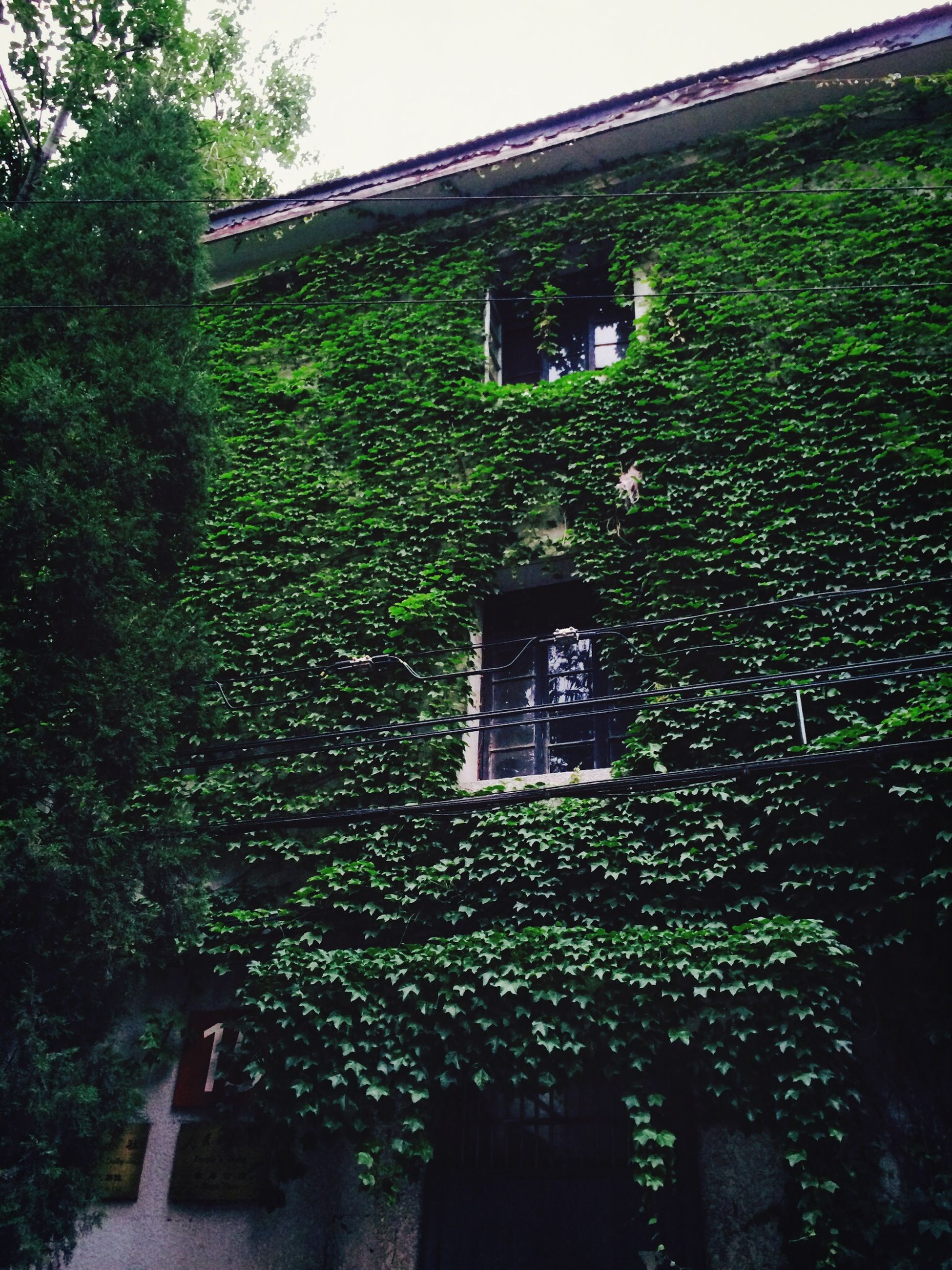 built structure, architecture, building exterior, growth, house, plant, green color, tree, window, ivy, residential structure, day, nature, no people, sunlight, outdoors, residential building, grass, growing, front or back yard