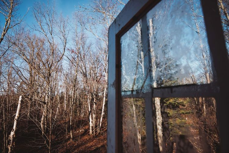 From a hunting cache Hunting Hunt Hunter Trees Trees And Sky Fall Fall Beauty Ice Frost Water Frosted Glass Backgrounds Curtain Looking Through Window Window Full Frame Wet Glass - Material Glass See Through Window Frame