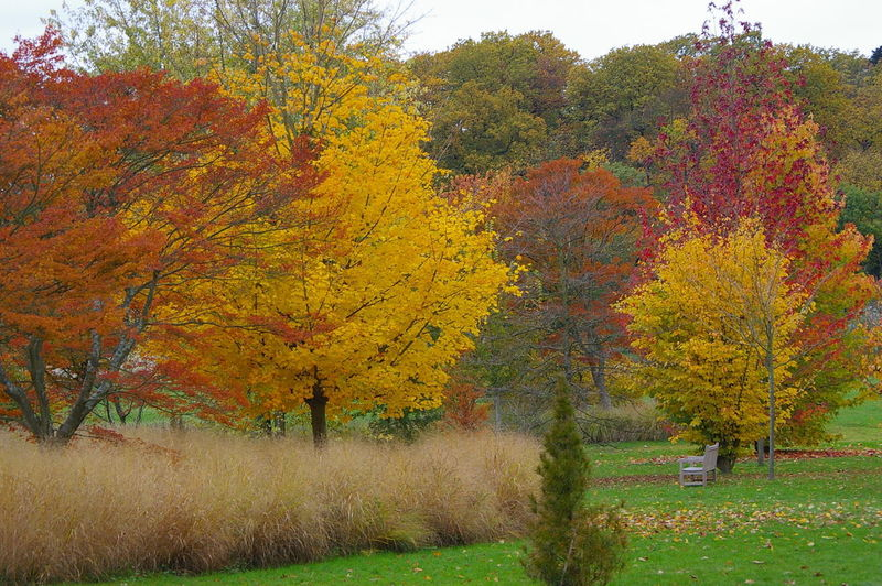 Paint The Town Yellow Arboretum Autumn Field Grass Landscape No People Tranquility Yellow