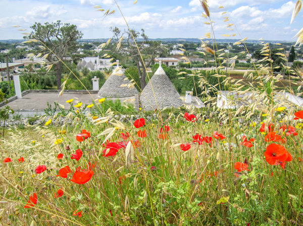 Puglia landscape with poppies field, flowers, trulli on background, traditional old house, Italy Grass Natural Panorama Puglia Rural View Beauty In Nature Countryside Field Flowers Grass Italy Landscape Nature Old Houses Outdoors Plant Poppies Field Poppy Spring Springtime Trulli Valle D'itria Wild Yellow