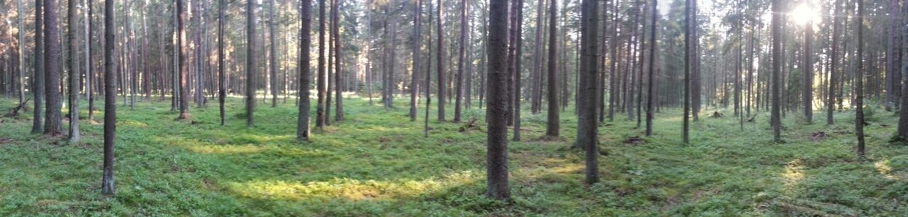 EyeEm Nature Lover DEEP FOREST Greentree Enjoying Life