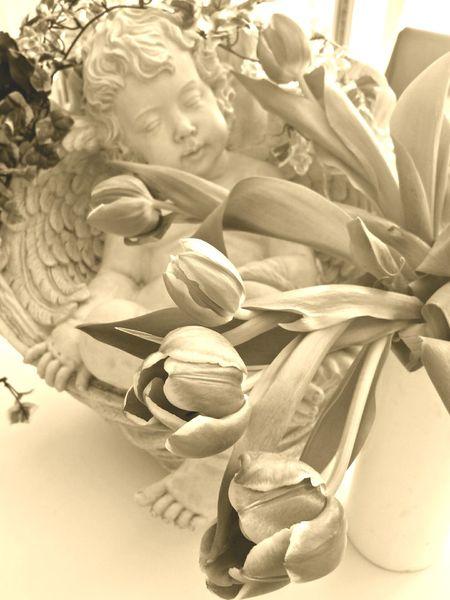 Happy Birthday Sandra! Sepia Edit Angel Angel Statue Tulips Putte Ladyphotographerofthemonth Angels Pastell