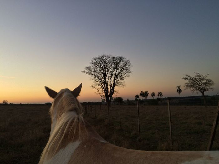 Rear view of horse standing on field against sky during sunset
