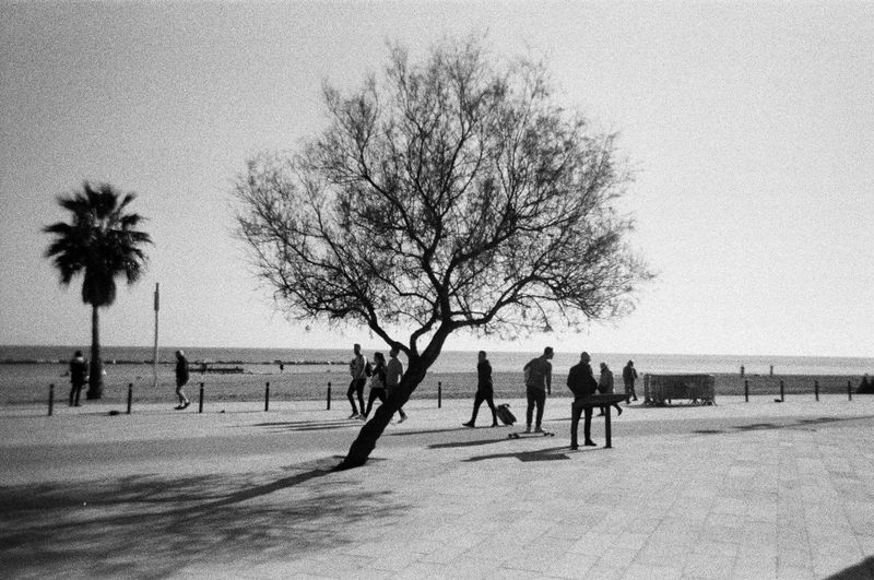 Film Nature In The City Tree Trunk Bare Tree Black And White Blackandwhite Clear Sky Day Film Photography Outdoors Single Tree Solitude Tree