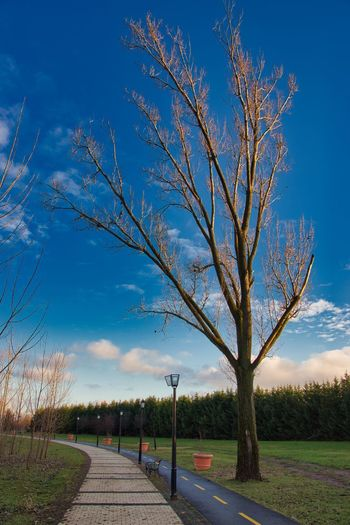 Bare tree by road on field against sky