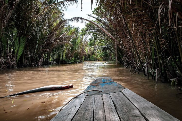 Mekong Delta boat trip Analogue Sound Beauty In Nature Coconut Palm Tree Day Forest Growth Nature No People Outdoors Palm Tree Plant River Scenics - Nature Sky Tranquility Tree Tropical Climate Water Wood Wood - Material My Best Travel Photo It's About The Journey 2018 In One Photograph Stay Out