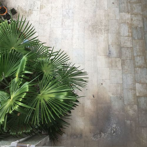 High angle view of palm tree by wall
