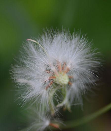 Close up shot