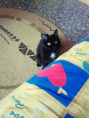 Beaitiful Pet Cat Black Yellow Eyes