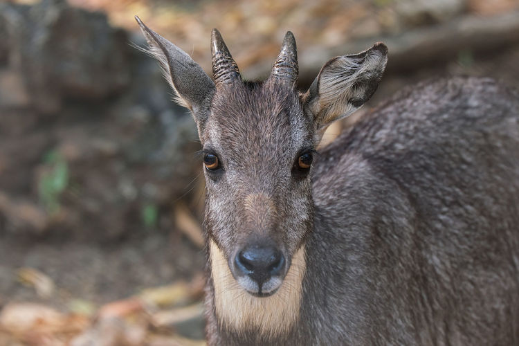 Portrait of deer