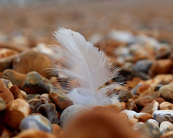 Feather & Pebbles Feather  Pebbles Beach EyeEm Selects No People Nature Feather  Solid Close-up Rock Outdoors Day Abundance Large Group Of Objects Beauty In Nature Land