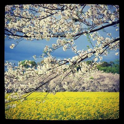 Весна.:3 Spring2014 Like  весна2014