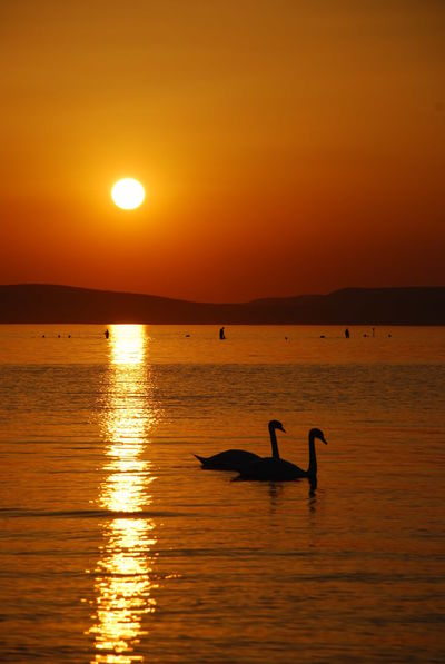 Swan Lake Atmosphere Black Distant Horizon Over Water Lake Light And Shadow Orange Outdoors Reflection Sea Shadow Shillouette Shore Summer Sunset Swan Vacations Water