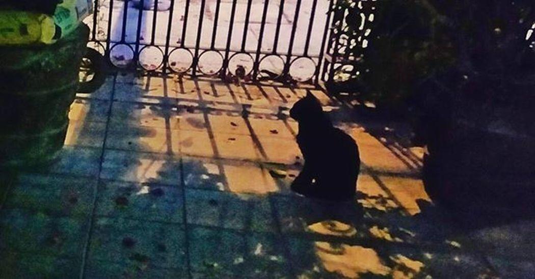 Silueta de Max Mexicocity  Happiness Fun Pet Instagood Animal Feliz Masco Ciudaddemexico Color Eye4photography  Photooftheday EyeEm Best Shots Mexicodf FotoDelDia Hello World Taking Photos Mexico Enjoying Life Instamex Mx  Animals