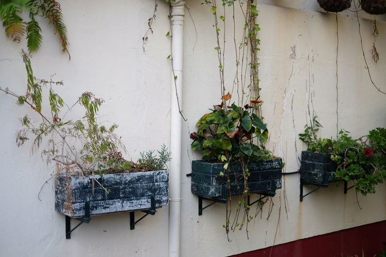 Potter Plants On Wall