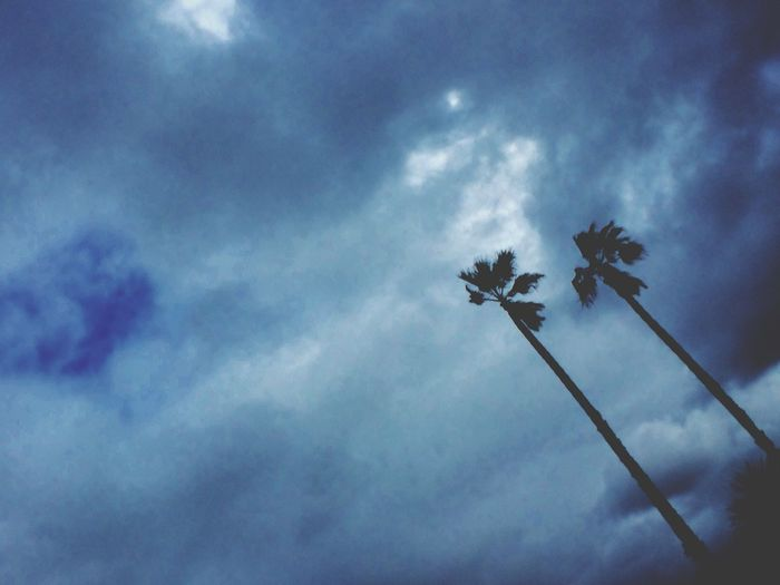 Palm Tree Bluesky Oacean Photography