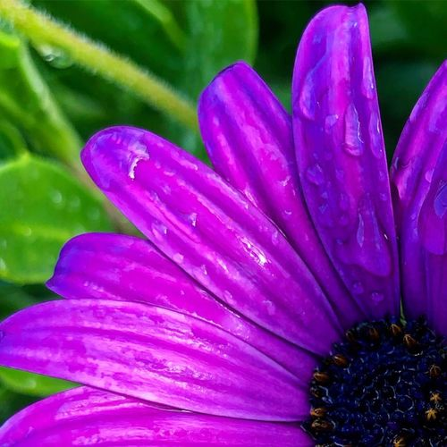 Having a good day?? Up Close Macro Nature_collection Nature Plant Flower Growth Freshness Beauty In Nature Flowering Plant Petal Purple