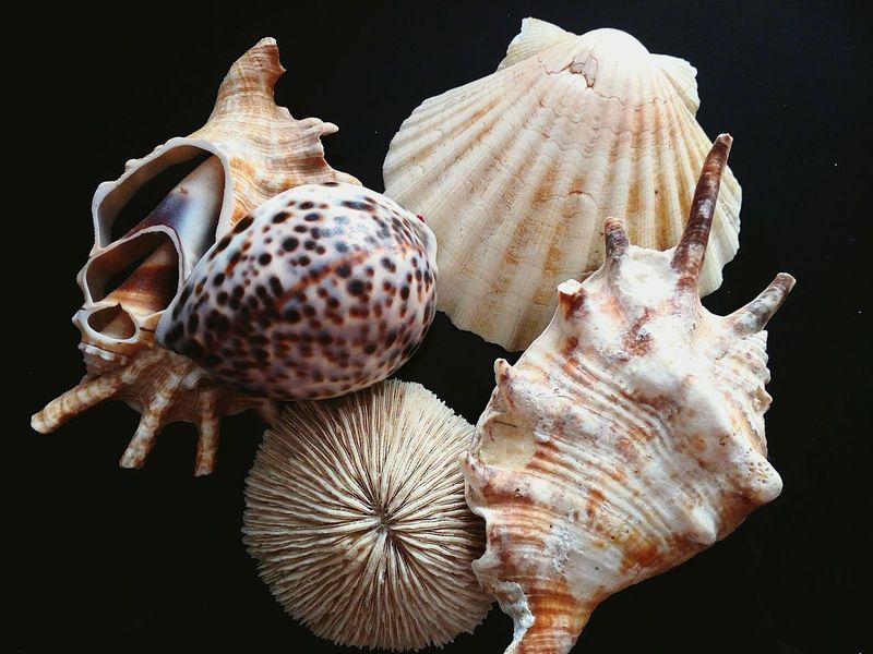 🐚 Conchiglie Beach Black Background One Animal Sea Life Animal Themes Nature Animals In The Wild Day