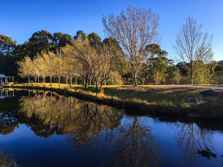 Fagun Park, Galston, Western Sydney Reflection Water Beauty In Nature Tranquil Scene Lake Tranquility Nature