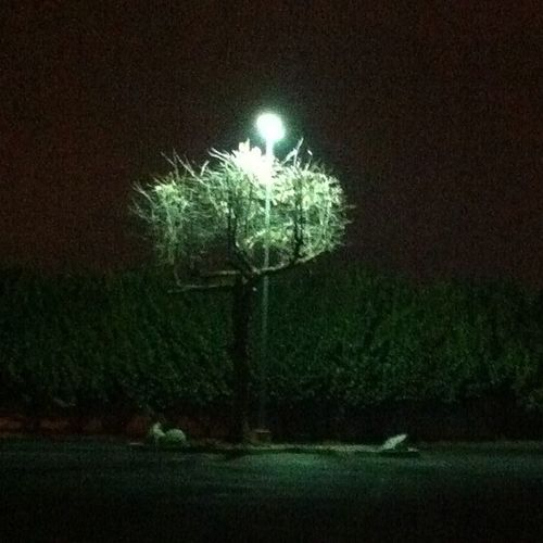 Tree in the shadows of the light. All in all it's a CREEPY TREE. Unedited Tree Awesome Paranormalactivity Creepy Creepytree