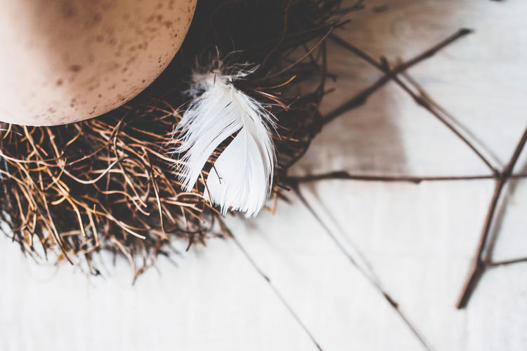 High Angle View Of Feather By Egg In Bird Nest