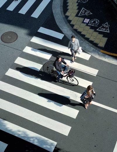 City Zebra