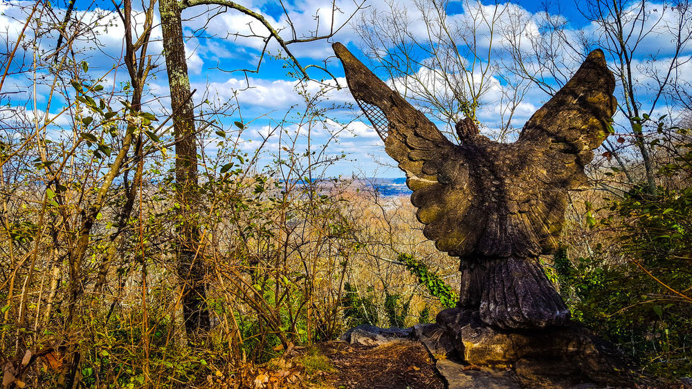 Sky Tree No People Nature Day Outdoors Beauty In Nature Chattanooga Eagle Lookout Mountain Tn EyeEmNewHere Nature_collection Eagles Nest Perspectivephotography Statue USA America Tennessee Mountains Tennessee Skies Tennesseephotography Tennessee!  Landscape_photography Backgrounds Odd Odd But Beautiful
