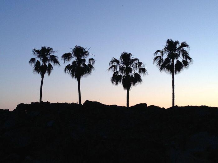 Sunset Beach Palm Trees Summer Tropical Tropicana Pastel Power Silhouette Holiday Croatia Four