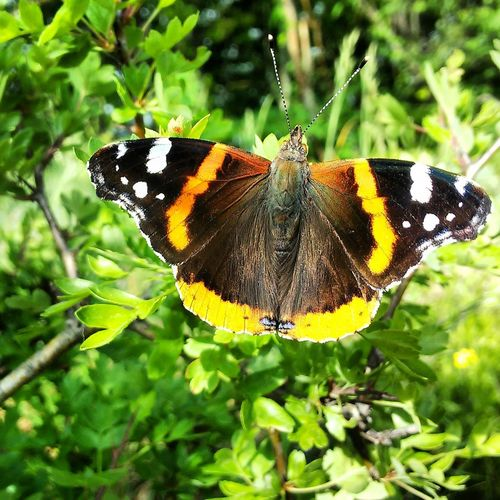 Butterfly Nature Followme
