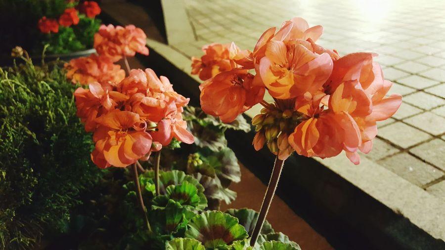 FlowerLove 🌸 Spring Is Coming