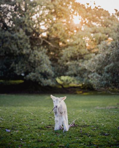Cat on a field