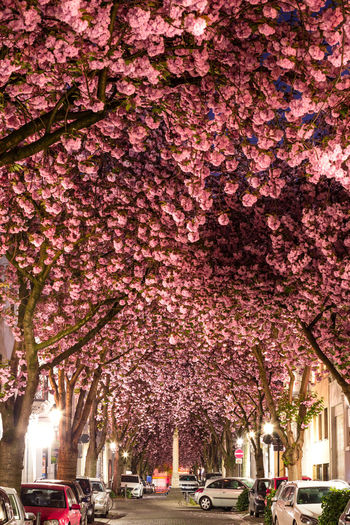 Pink flowers on road in city