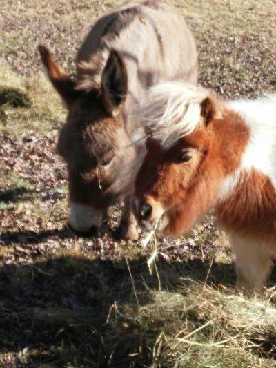 Cheese! Relaxing Enjoying Life Nature Horse Love Donkey Mini Horse