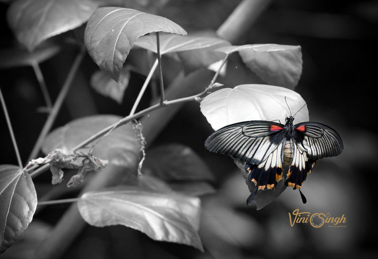 Butterfly Canonphotography Nature Photography Butterflies For Africa First Eyeem Photo