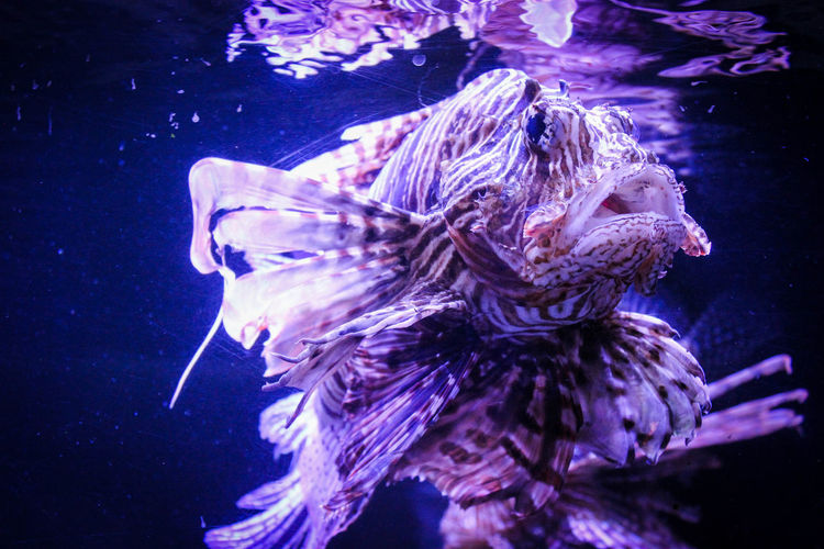 Animal Themes Animal Wildlife Animals In The Wild Aquarium Beauty In Nature Close-up Day Fish Nature No People One Animal Outdoors Sea Sea Life Swimming UnderSea Underwater Water