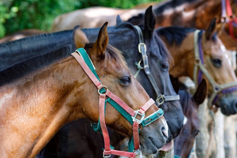 Horses Standing At Stable