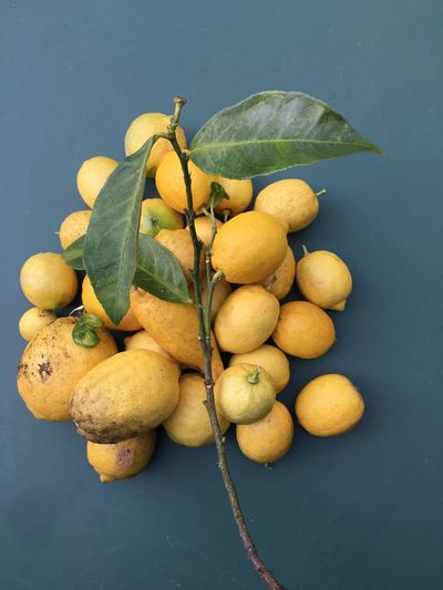 I Just Picked These Lemons Our Best Pics Spring Springtime Oudoors Yelloy Lemons Picked Takink Pics Love ♥ No People