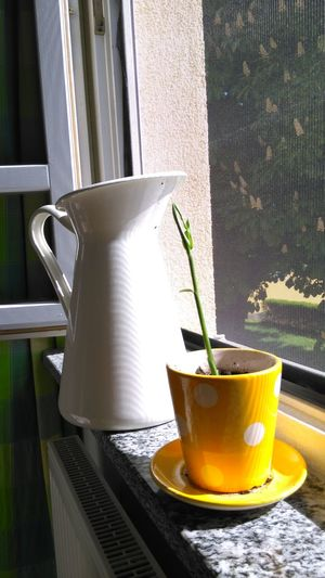 Close-Up Of Pitcher On Window Sill