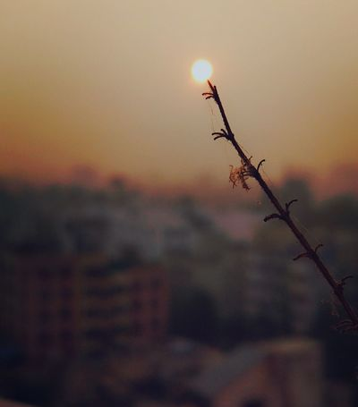 Beauty In Nature Sunriselover Branch Of A Tree