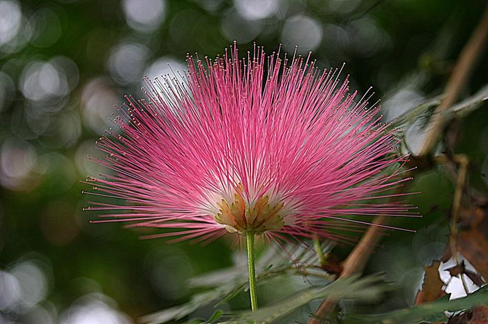 Flower Noedit Flowerforfriends Eyeemnaturelover💕💕😊☺ Exclusive_flower Flower_Collection Pinkypinky Beauty In Nature
