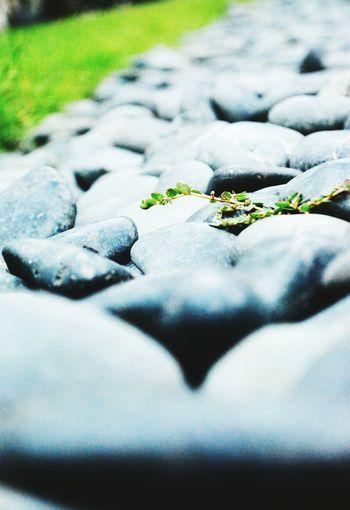 One leaf leave.