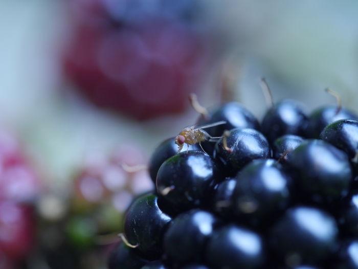 Close-up of black fruit