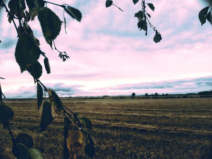 Farmland Pink