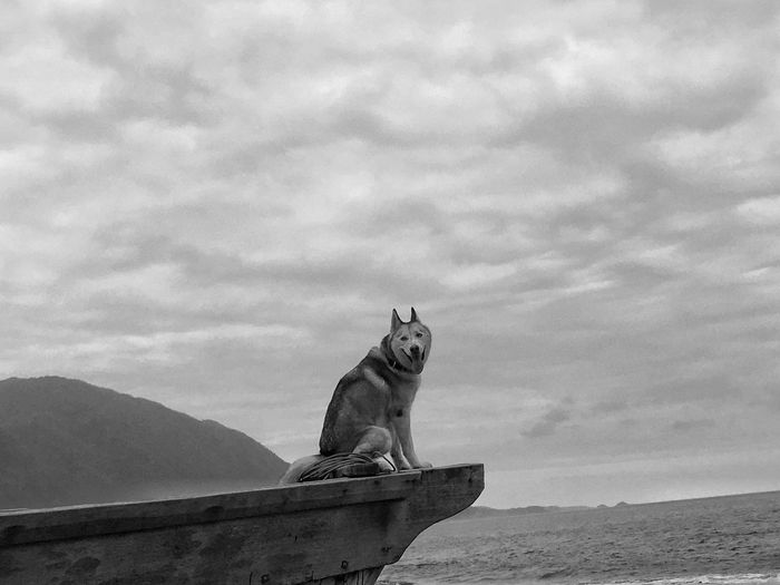 Dog looking away by sea against sky